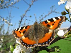 butterfly-225819